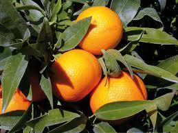 clementinegolfotaranto