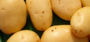 Patata Zapponeta