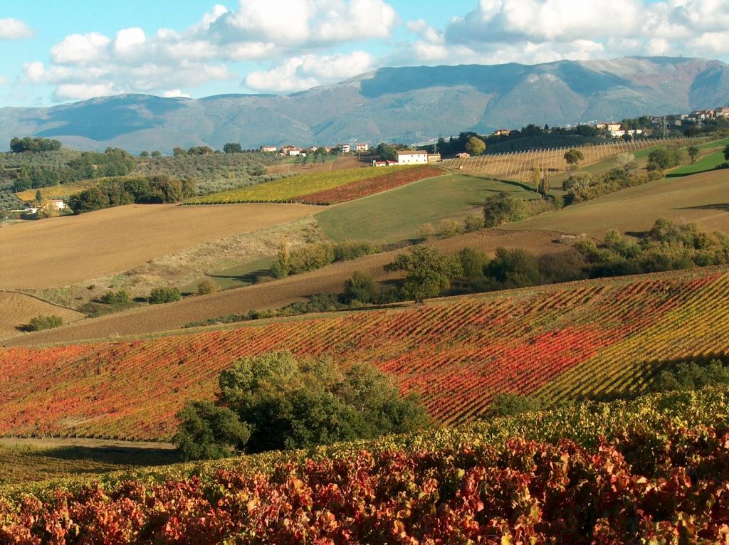 Montefalco-Paesaggio-e-vigneti-rosseggianti